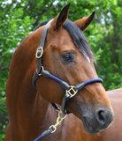 Pfiff Lina halster donkerblauw paard